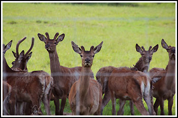 See different typoes of Farming - Deer farming with Hawkes Bay Scenic Tours
