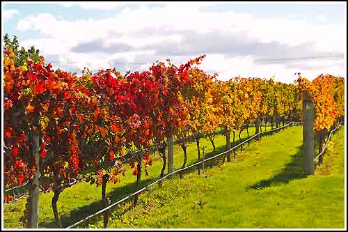 Enjoy informative and fun Wine Tours with Hawkes Bay Scenic Tours